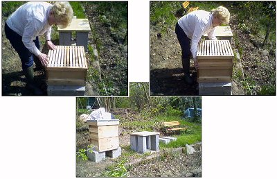 Susan constructs the hive on its plinth.